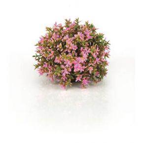 biOrb Boule topiaire rose
