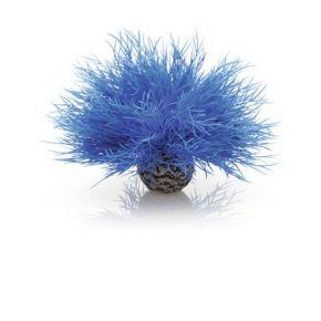 biOrb Lys de mer bleu