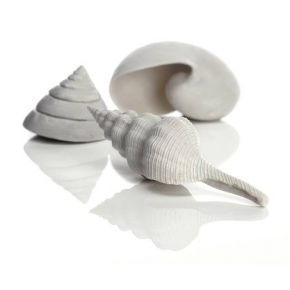 biOrb Set de 3 coquillages blancs