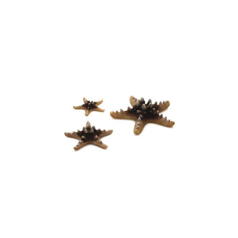 biOrb Set de 3 étoiles de mer naturelles