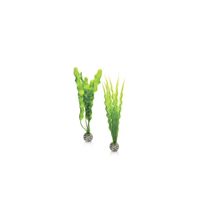 biOrb Set de plantes moyennes vertes