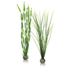 biOrb Set de grandes plantes vertes