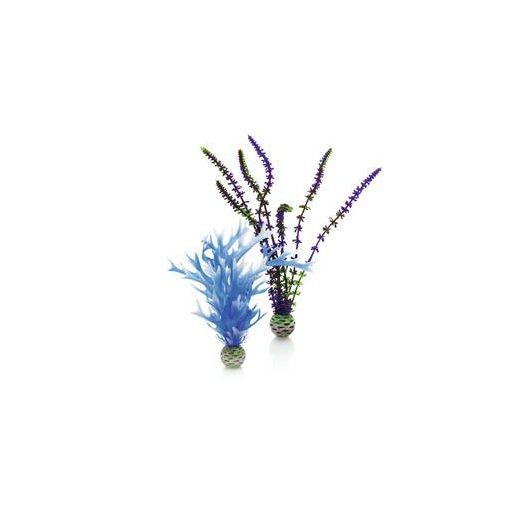biOrb Set de plantes moyennes bleues & violettes