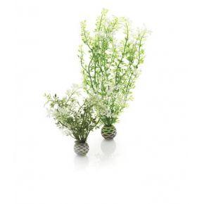 biOrb Set de 2 plantes hivernales