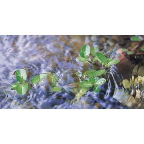 Filtre UV bassin Vitronic 55W Oase