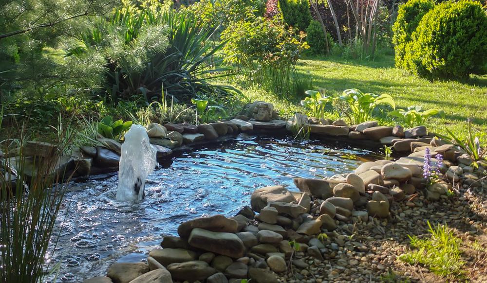 Le respect des espaces et volume bassin/jardin