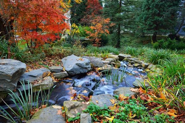 La meilleure saison pour construire son bassin de jardin, c'est l'Automne !